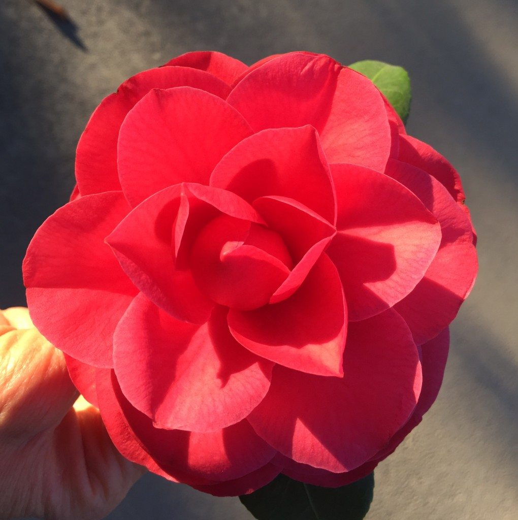 Beautiful red pink flower